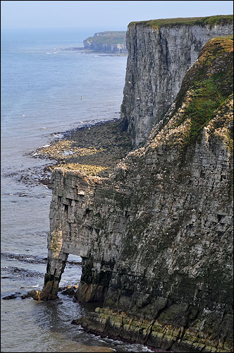 Bempton East Yorkshire 400 ft cliffs