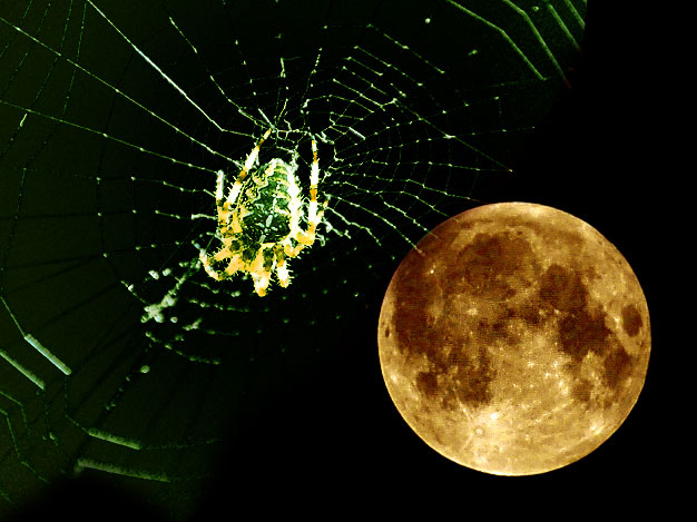 Moonspider